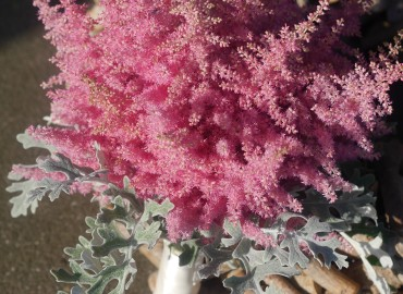 Astilbe and dusty miller bouquet