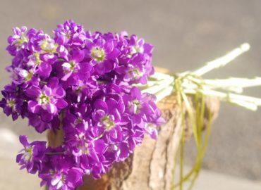 Stocks bouquet