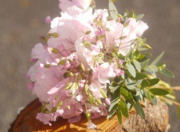 Sweetpeas bouquet