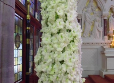Tall column of delphinium