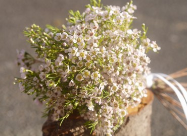 Waxflower bouquet