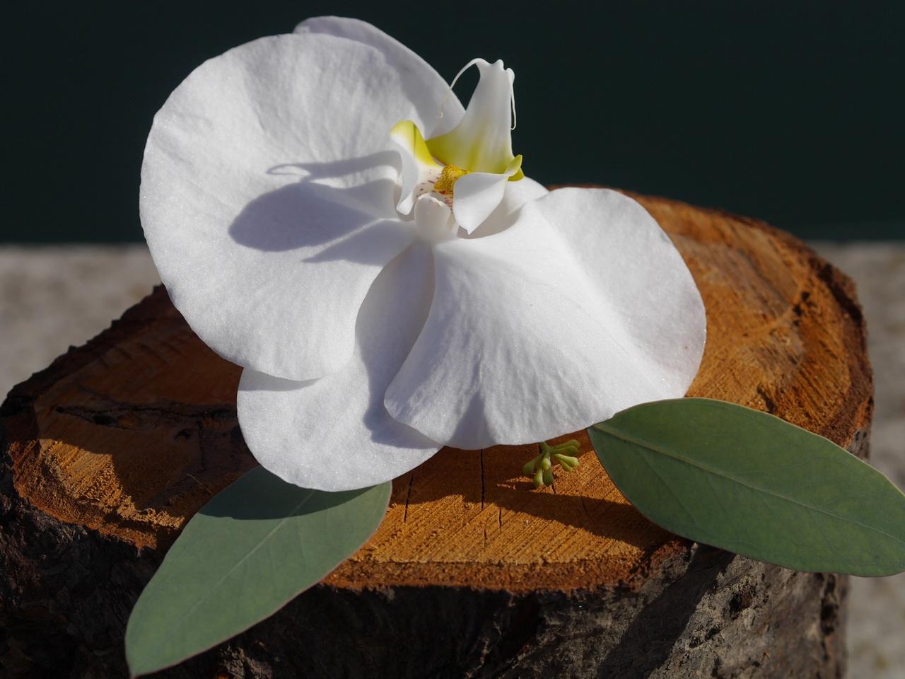 White orchid buttonhole