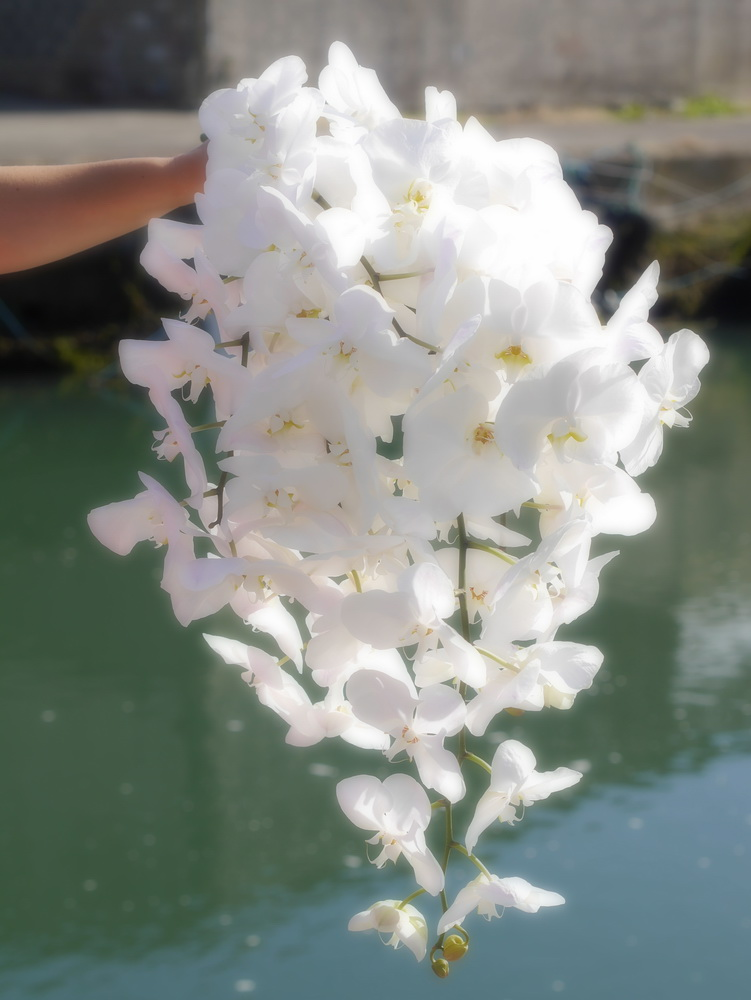Cascading bouquet of white orchids