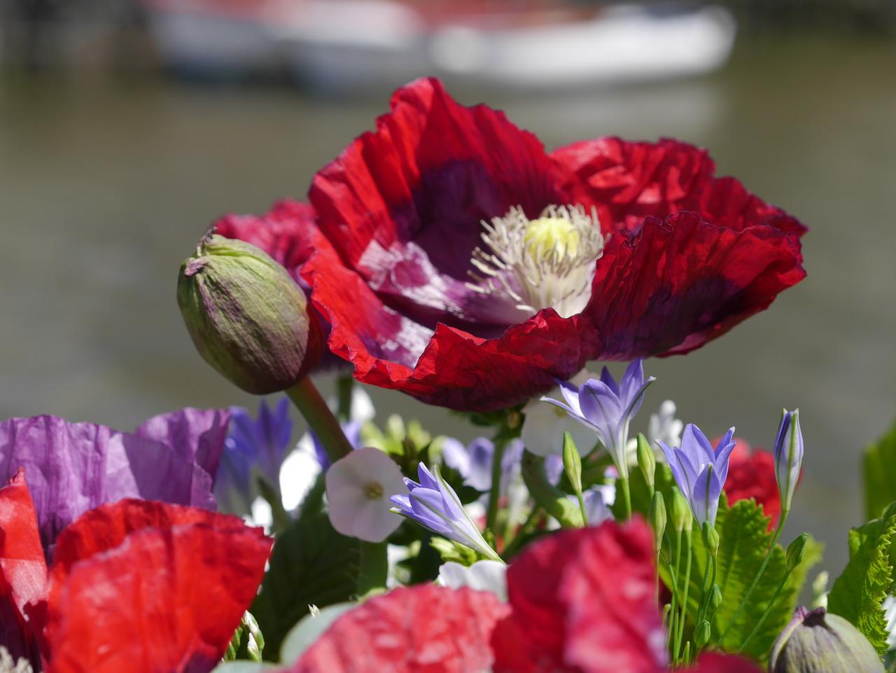 Wicklow flowers