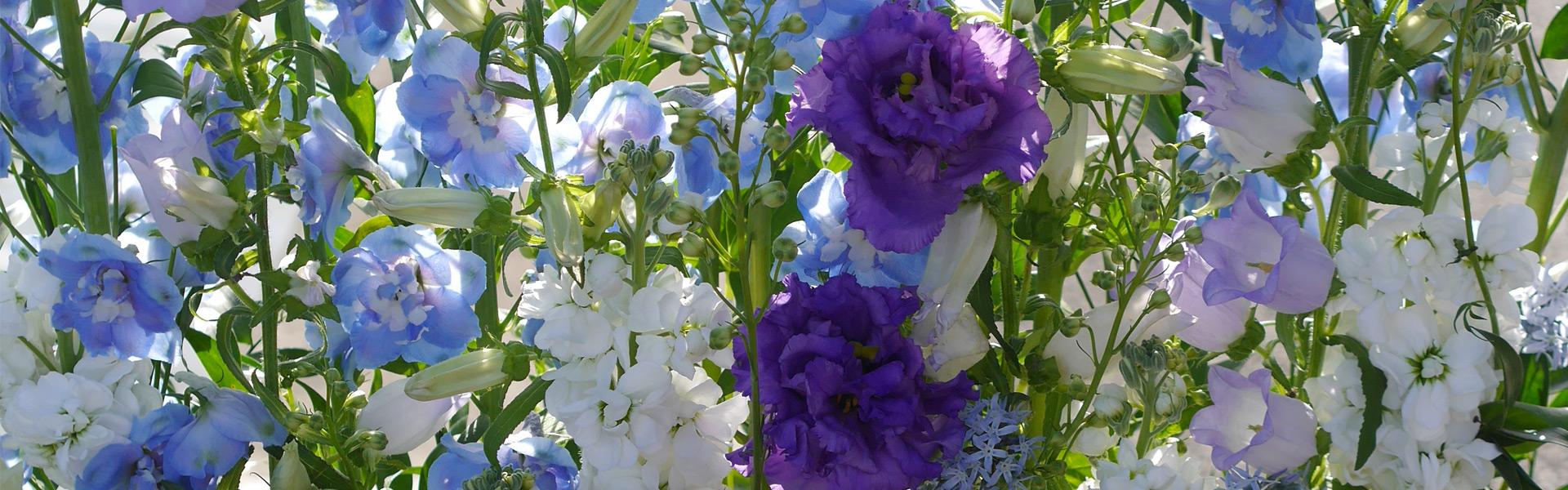 symphaty_flowers
